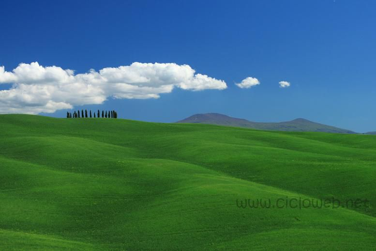 orcia11